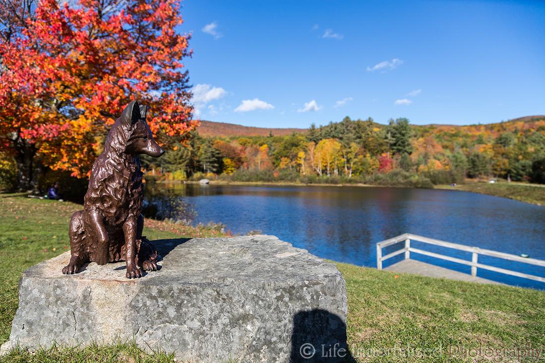 Wolf Statue Shannon Pond