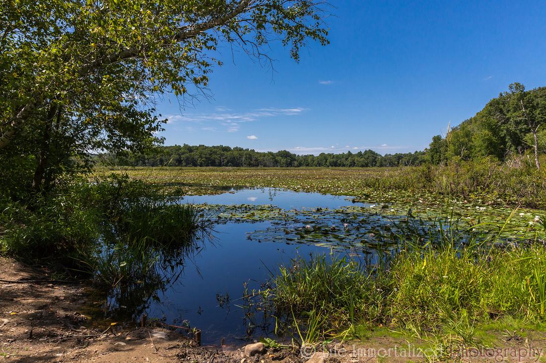 Ipswich River Wildlife Sanctuary