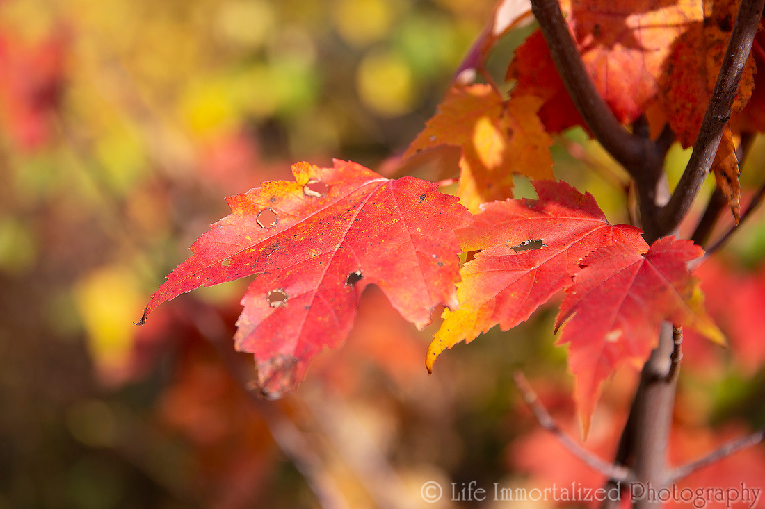 Foliage Leaf