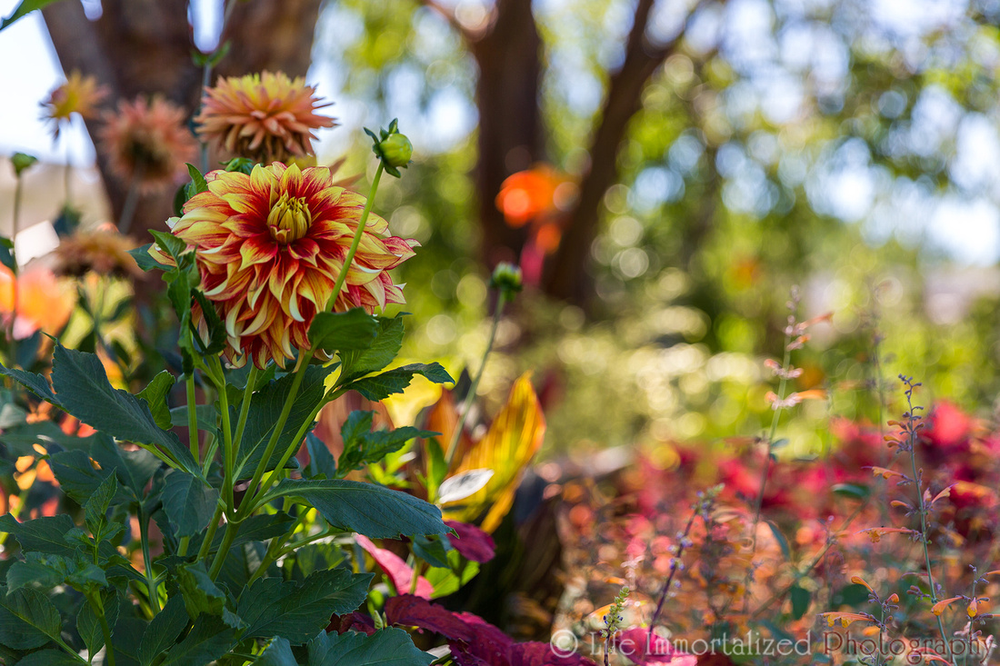 Tower Hill Garden